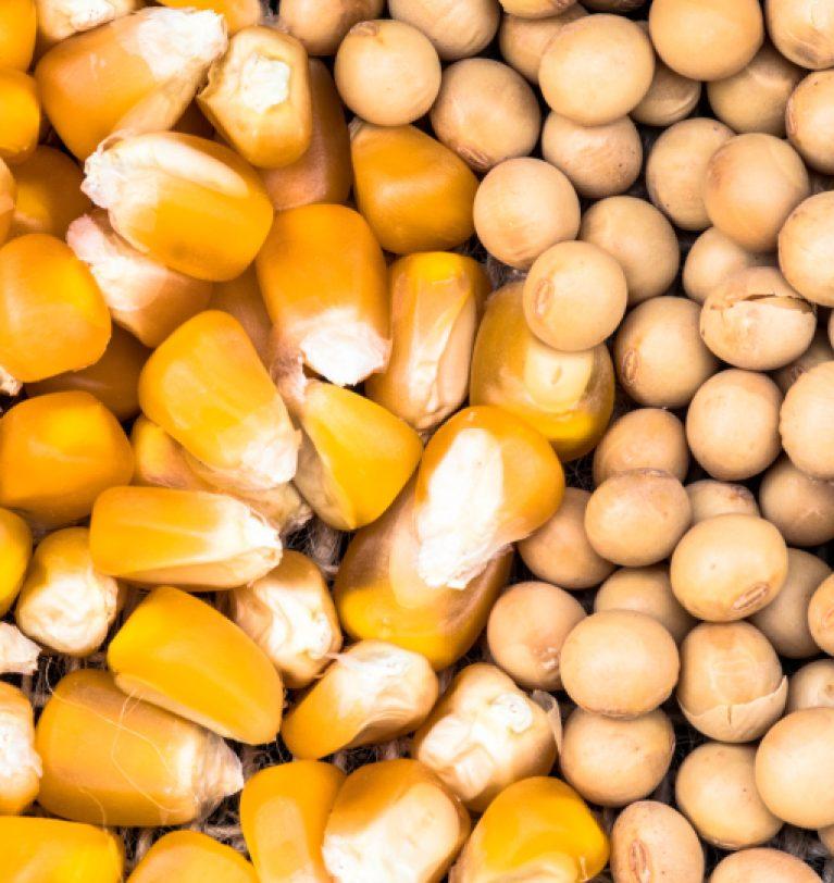 Прогнозы по урожаю зерна и масличных в Украине оптимистичны