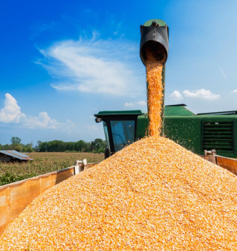 Экспорт зерновых из Украины превысил 12 млн т