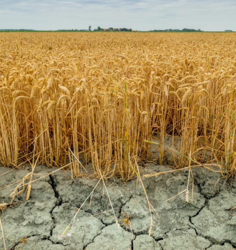 Черноморскому региону прогнозируют период засухи