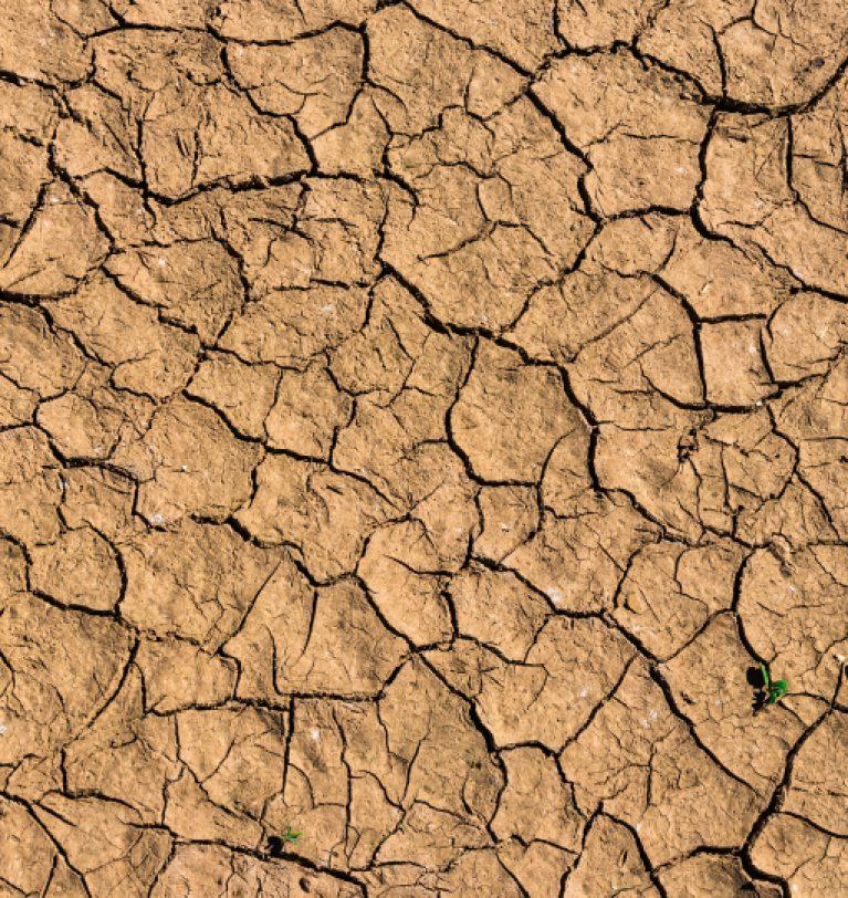 Из-за климата Одесский регион потерял урожай на 160 тыс. га площадей