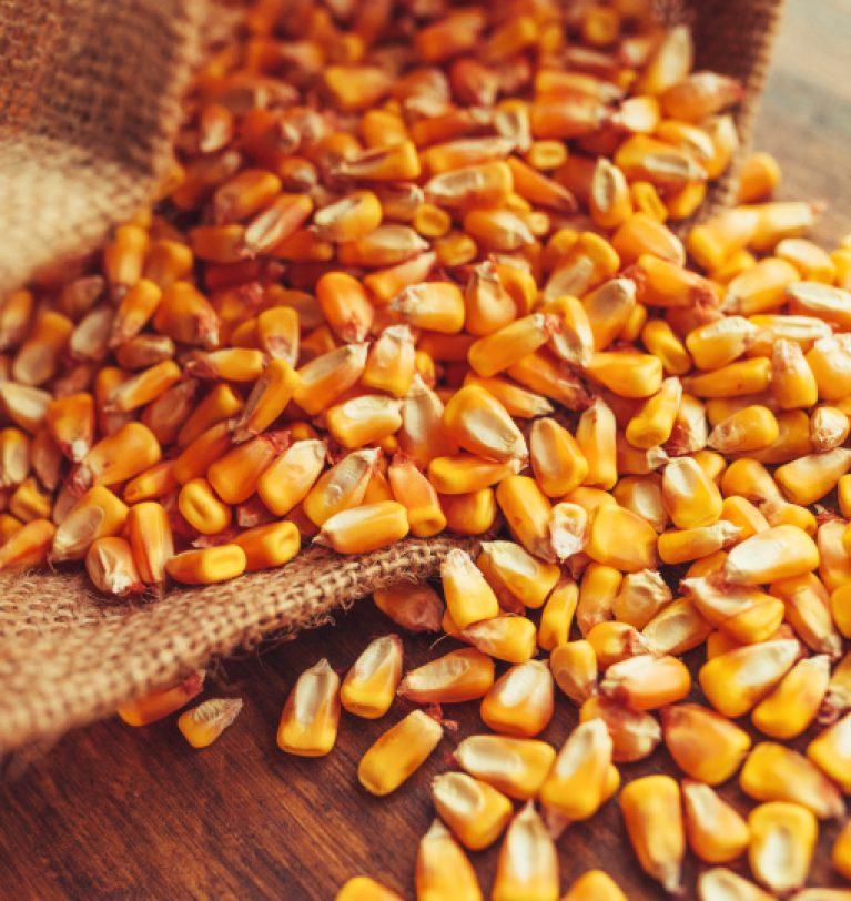 ТОП-3 крупнейших импортера украинской кукурузы