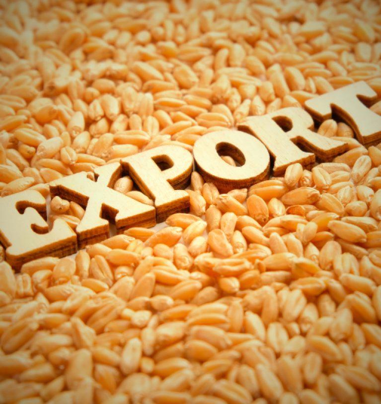 Новый рекорд экспорта зерна