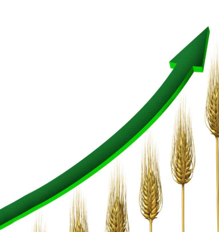 На внутреннем рынке Украине активный рост цены на пшеницу