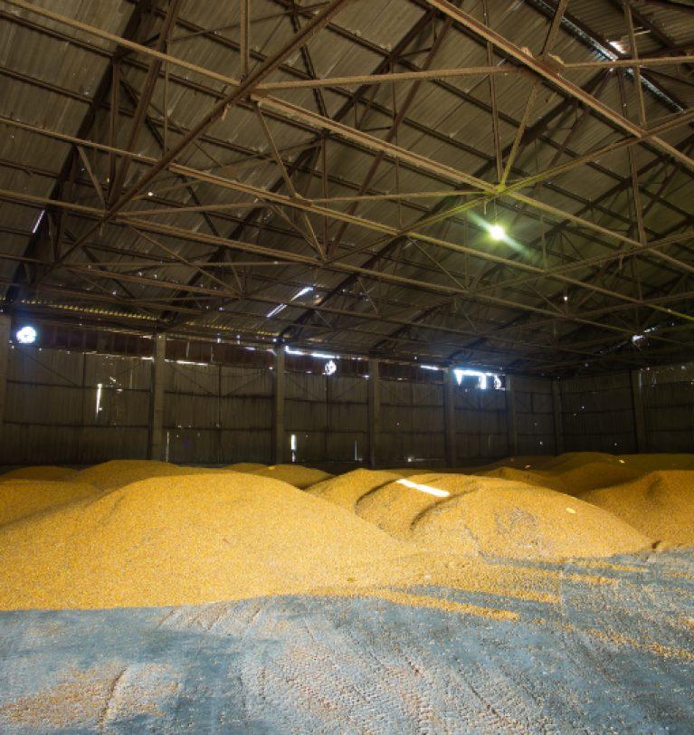 Запасы зерна в хранилищах снизилась почти на 40%
