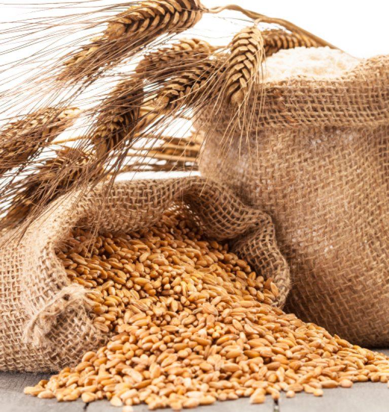 В Украине уже собрали 1,1 млн тонн зерна