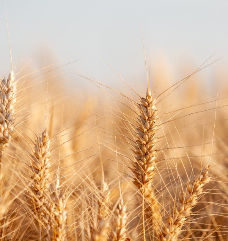 Экспорт украинского зерна снизился на 1,2 млн т