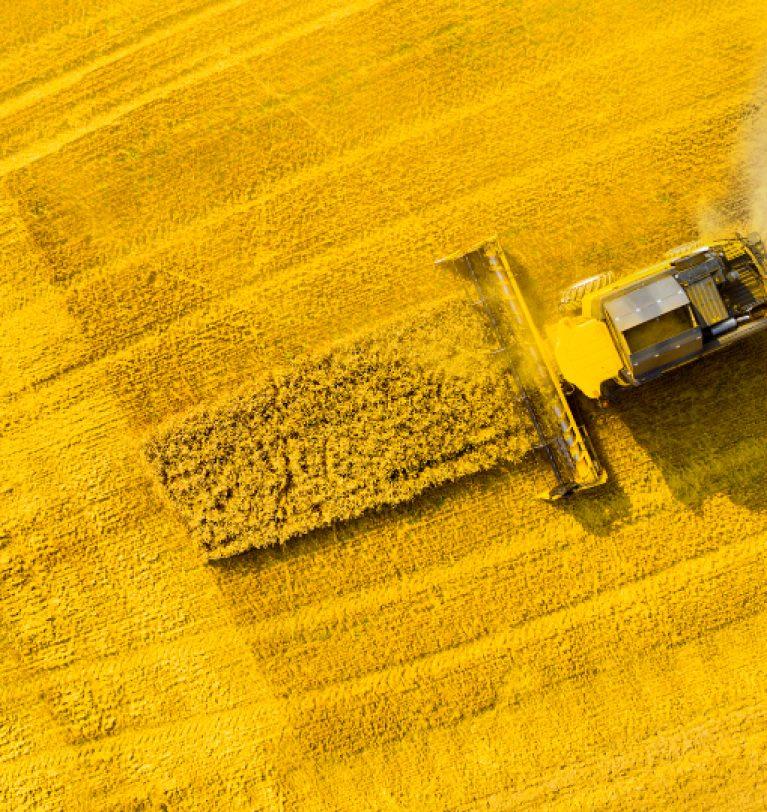 ТОП-10 областей-лидеров по объему урожая рапса