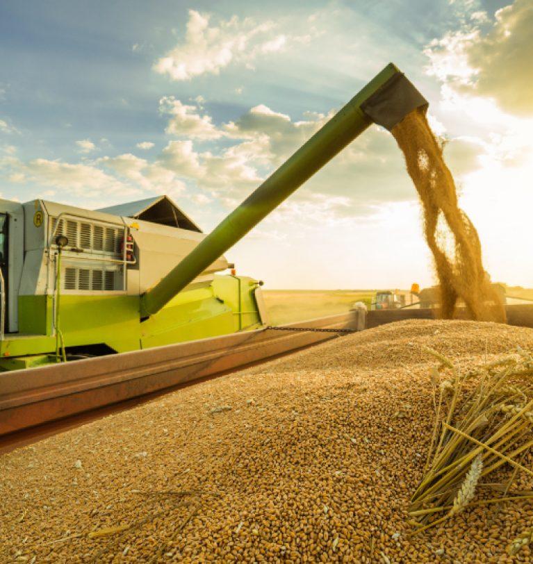 Аграрии собрали 36,7 млн т зерна