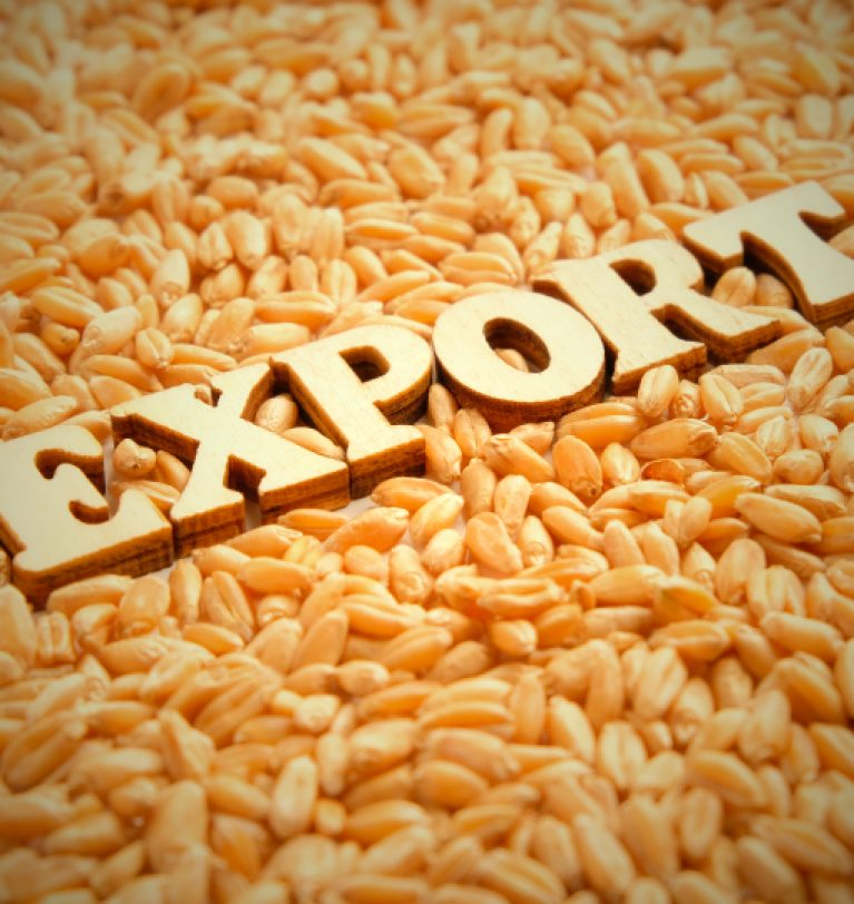 Экспорт зерновых сократился на 36%