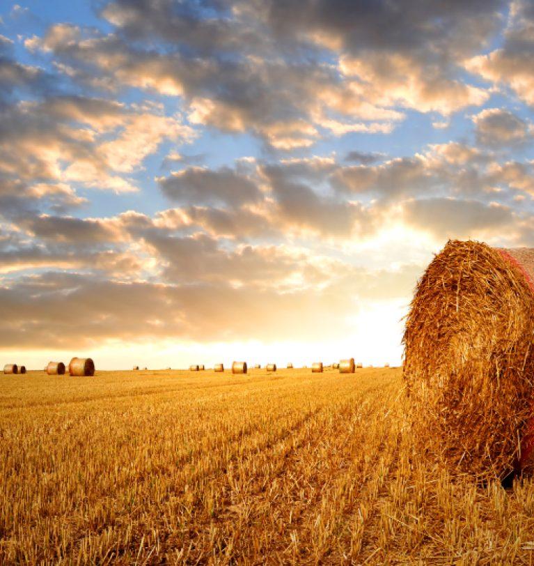 Количество собранного зерна достигло 27 млн т