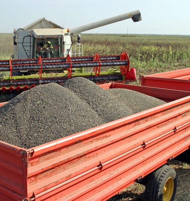 Элеватор «Зерно-Агро» одним из первых принял подсолнечник урожая-2020.
