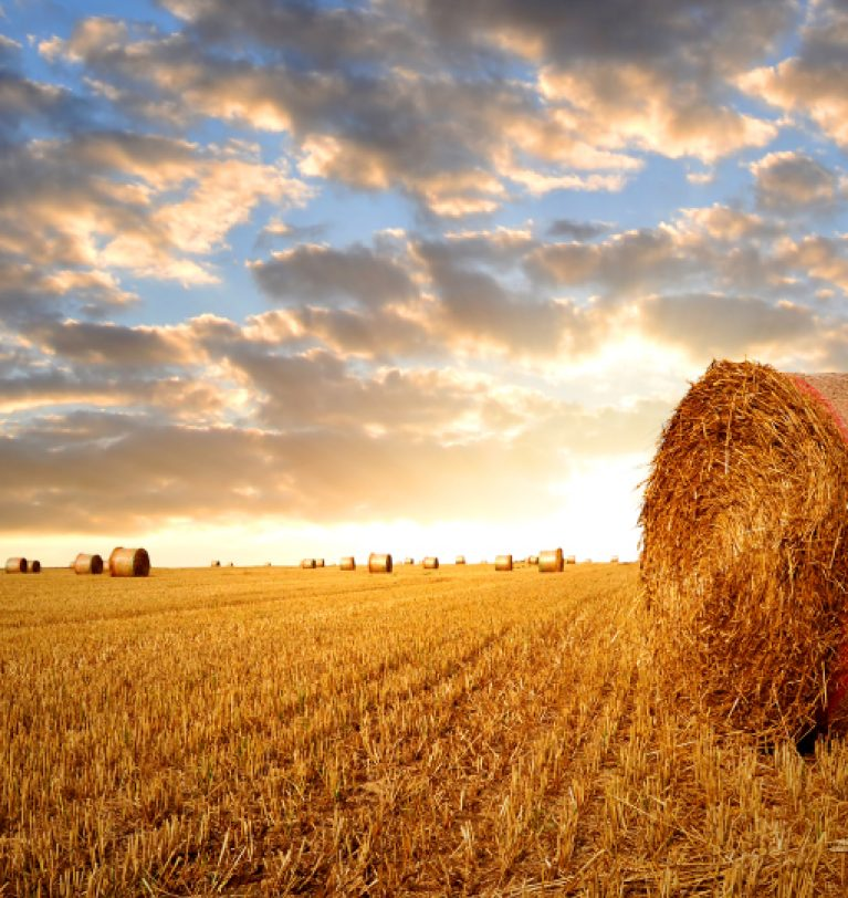 Собрано более 38 млн т  зерновых