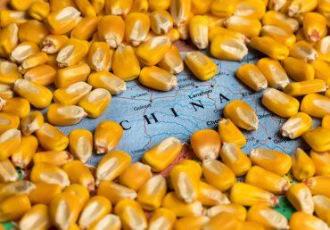 Китай увеличил импорт украинской кукурузы на 43%