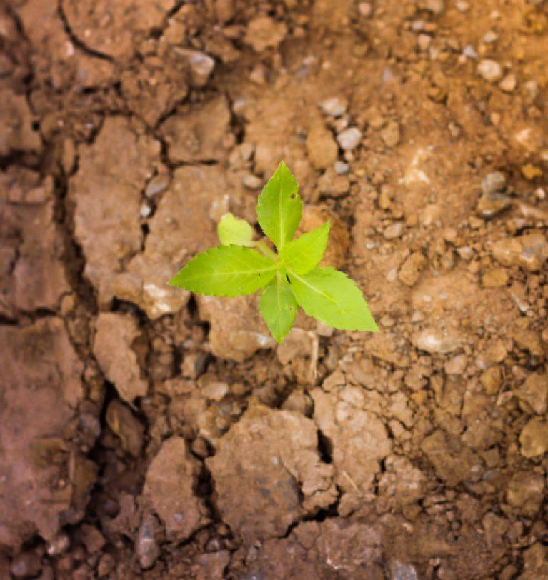 «Укргидромецентр» сообщает о воздушно-почвенной засухе