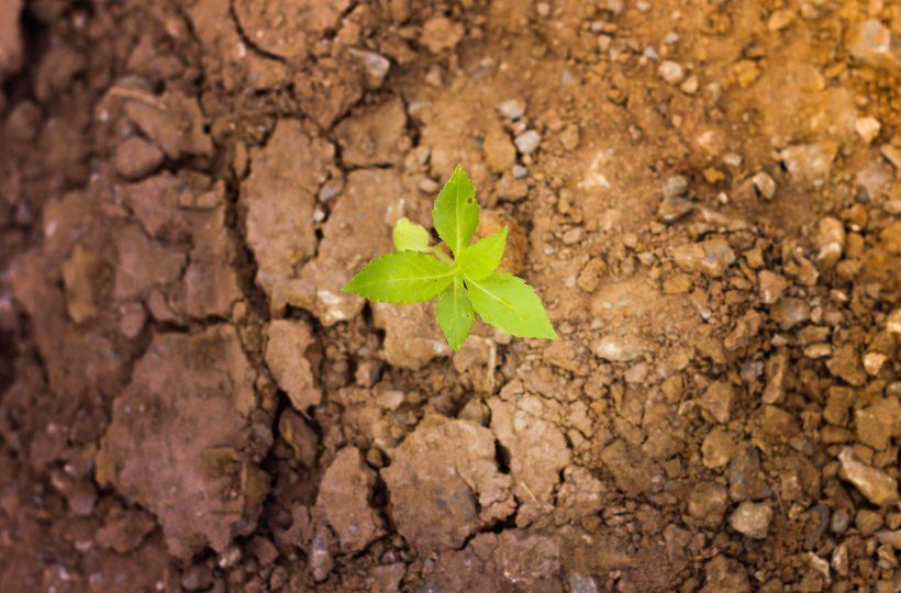 Свыше 40% с/х украинских земель могут утратить плодородность — исследование