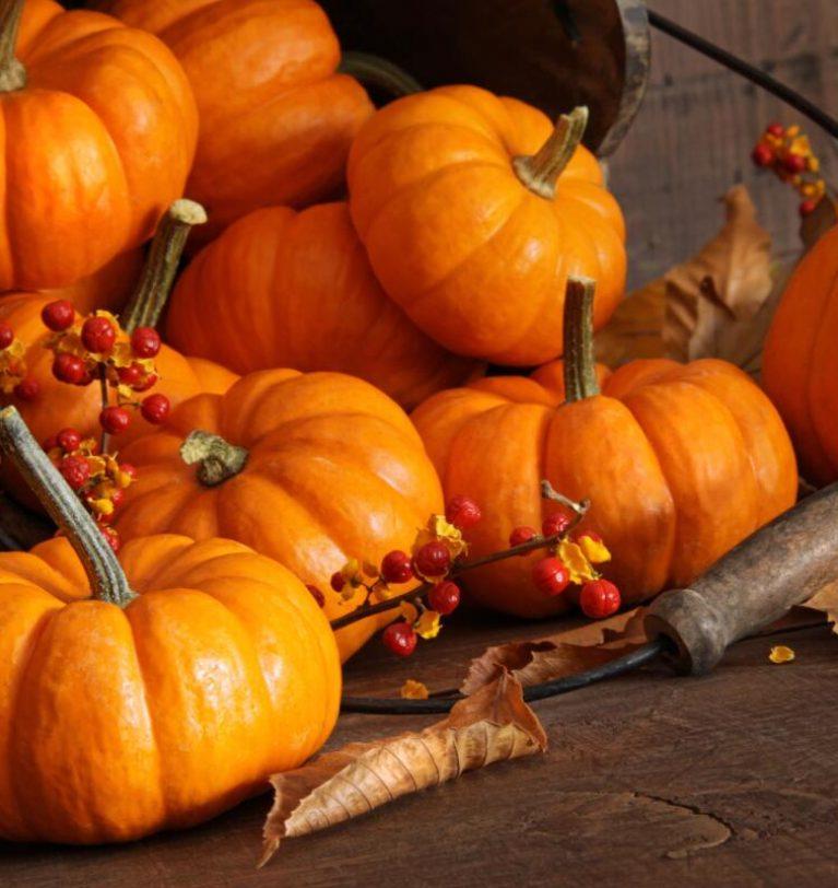Накануне Хэллоуина цены на тыкву поднялись в 3 раза