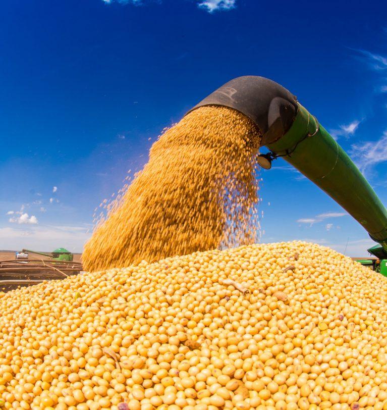 В 5 областях Украины завершена уборка сои