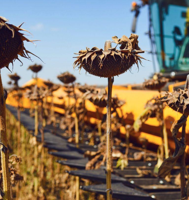 Урожай подсолнечника в Украине на 2 млн т меньше (эксперты USDA)