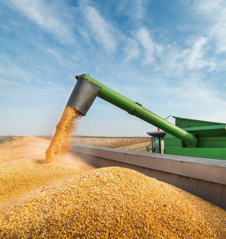 В Украине прогнозируют самый низкий урожай кукурузы за 8 лет