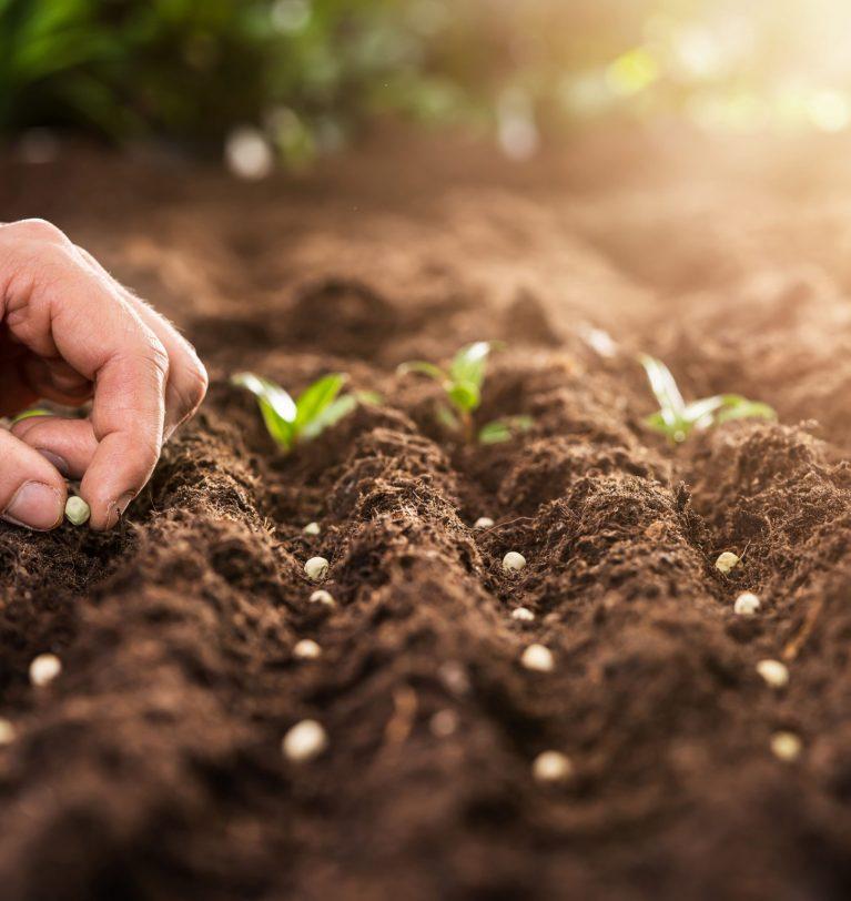 Бессарабия может остаться без урожая