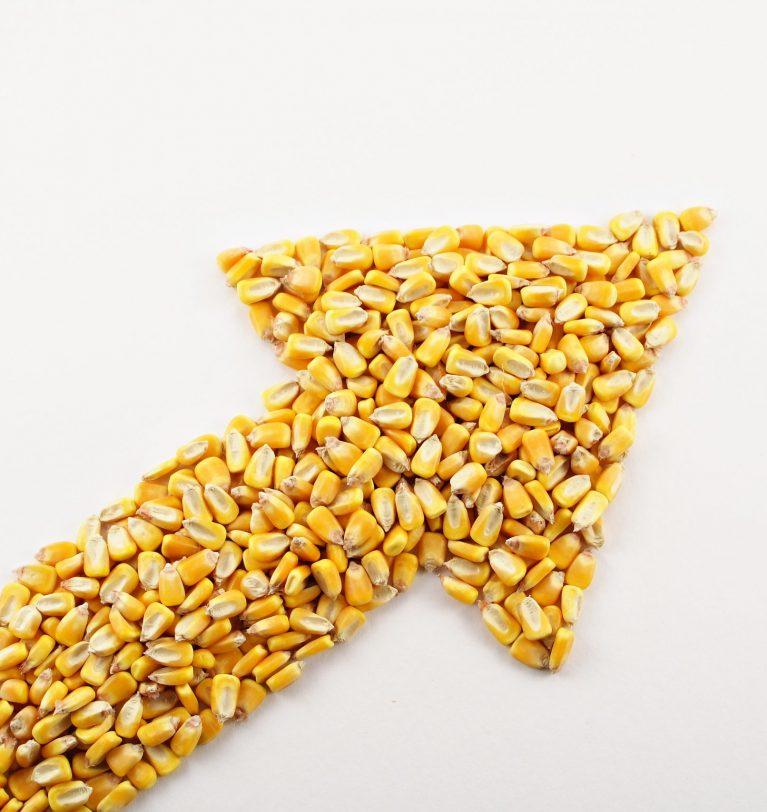 Рост цен на кукурузу вызвал январский отчет USDA