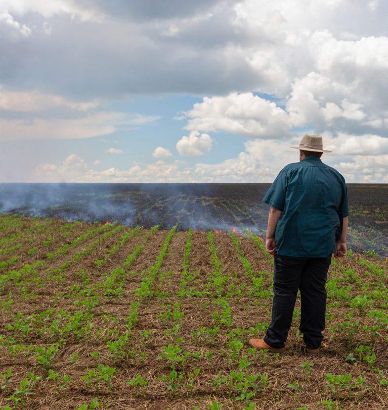 НДС буде отменен в случае гибели урожая?