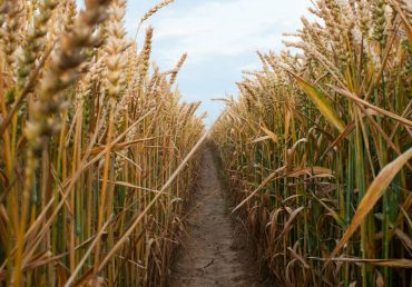 Врожай онлайн. Аграрії намолотили більше 14 млн т зерна