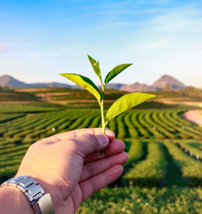 Прогноз зерновых в Украине в следующем сезоне оптимистичный – USDA
