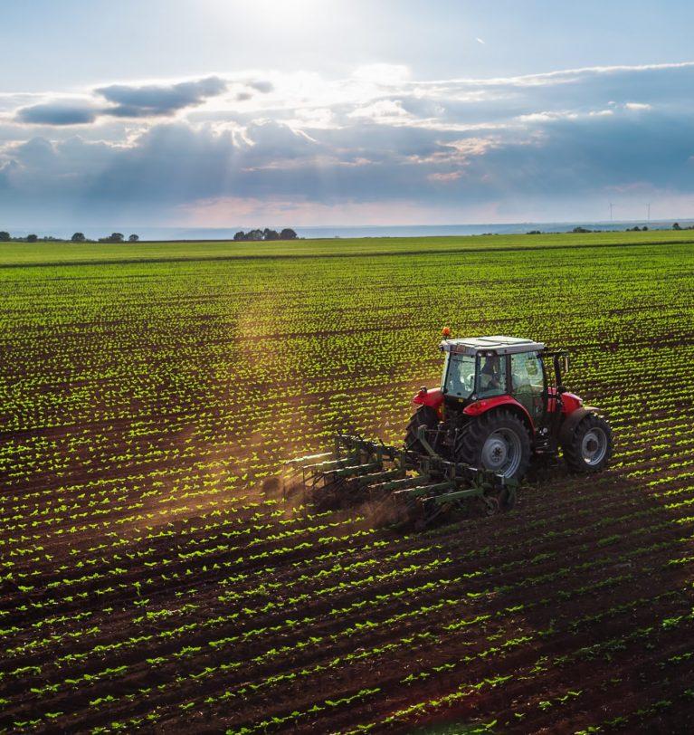 Состояние посевов яровых и озимых в хорошем состоянии (данные НААН)