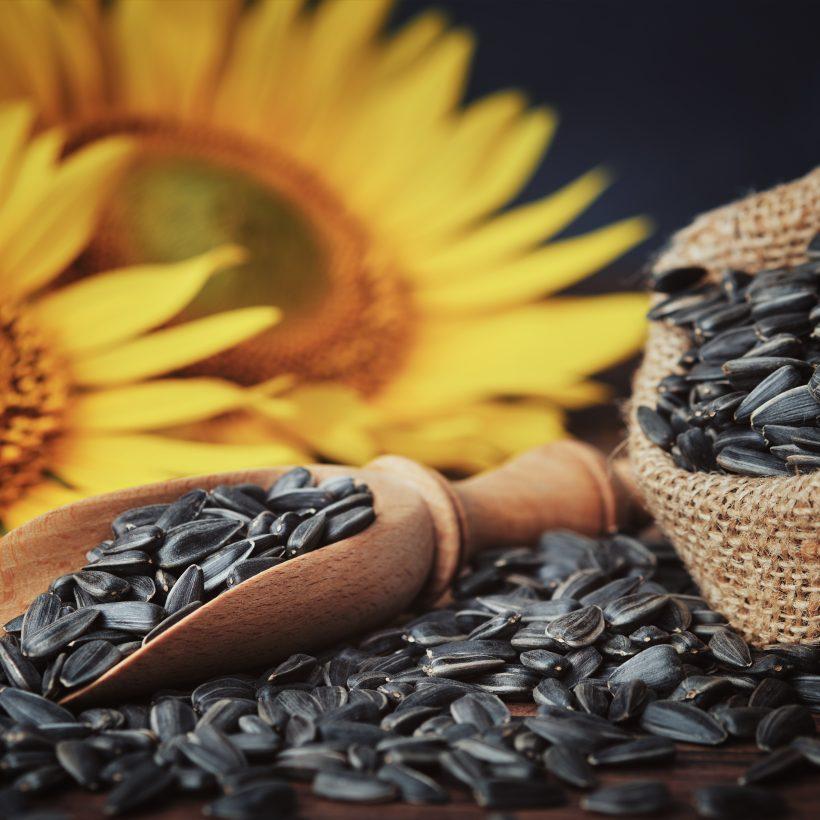 ТОП-5 областей-лідерів з врожайності соняшника